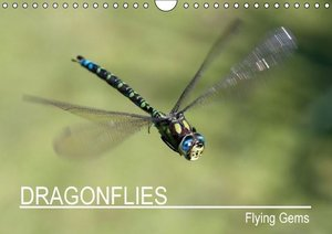 Lippmann, A: Dragonflies - Flying Gems / UK-Version