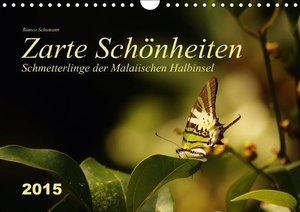 Schumann, B: Zarte Schönheiten Schmetterlinge der Malaiische
