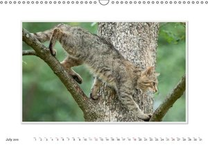 Emotional Moments: The Wildcat. UK-Version (Wall Calendar 2015 D
