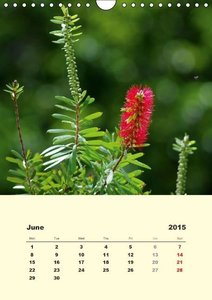 Schumann, B: Flower Shapes / UK-Version