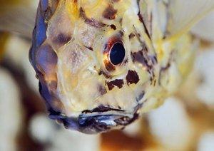 Zauberhafte Fische - Aquarienfotografie (Posterbuch DIN A2 quer)