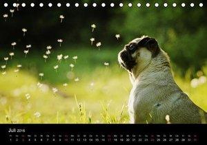 Der MOPS-Kalender (Tischkalender 2016 DIN A5 quer)