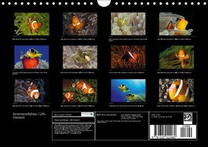 Jager, H: Anemonefishes / UK-Version