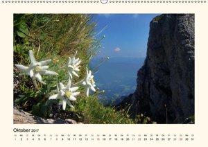 Blütenzauber in Tirol