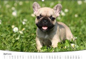 Welpen - Puppies (Wandkalender 2016 DIN A2 quer)