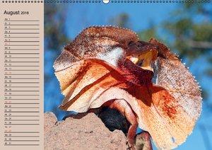 Australiens Tierwelt (Wandkalender 2016 DIN A2 quer)