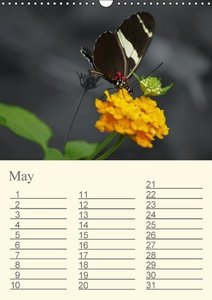 Delicate Beauties - Exotic Butterflies (Wall Calendar 2015 DIN A