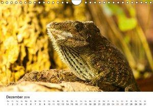Faszination - Echsen (Wandkalender 2016 DIN A4 quer)