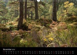 Scottish Highlands Flora and Fauna (Wall Calendar 2015 DIN A3 La