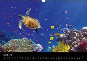 Riffleben - Einfach mal abtauchen (Wandkalender 2016 DIN A3 quer