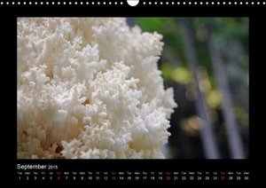 Fungi / UK-Version (Wall Calendar 2015 DIN A3 Landscape)