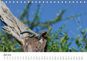 Faszination - Echsen (Tischkalender 2016 DIN A5 quer)