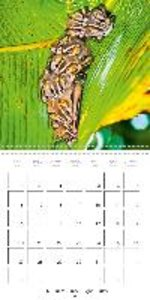 Bats and flying foxes: Living hang gliders (Wall Calendar 2015 3