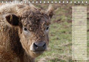 Glückliche Kühe (Tischkalender 2016 DIN A5 quer)