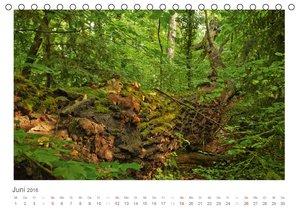 Wildes Wien fotografiert von Andreas Riedmiller (Tischkalender 2