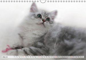 Purebred Cats (UK-Version) (Wall Calendar 2015 DIN A4 Landscape)