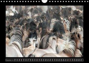 Dülmener Wildpferde (Wandkalender 2016 DIN A4 quer)