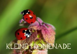 Kleine Promenade - Insektenwelt (Posterbuch DIN A2 quer)
