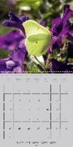 Flying Jewels (Wall Calendar 2015 300 × 300 mm Square)