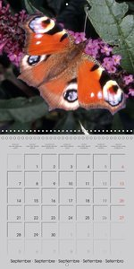 Flying Jewels (Wall Calendar 2015 300 × 300 mm Square)