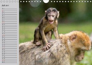 Faszination Affen. Kobolde zum Verlieben