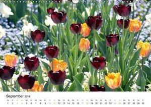 Tulpen (Wandkalender 2016 DIN A3 quer)
