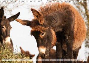Zauberhafte Esel