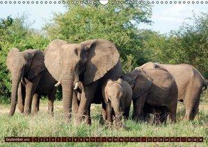 Stanzer, E: Elefanten in freier Wildbahn (Wandkalender 2015
