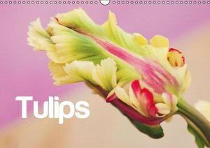 Tulips - English Version (Wall Calendar 2016 DIN A3 Landscape)