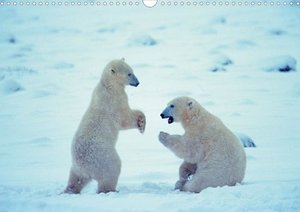 Polar Bears (posterbook DIN A4 landscape)