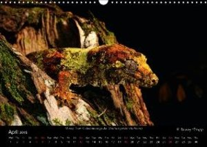 REPTILES / UK-Version (Wall Calendar 2015 DIN A3 Landscape)
