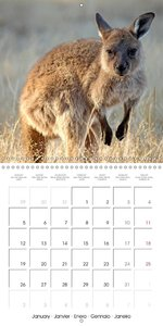 beautiful Australia (Wall Calendar 2015 300 × 300 mm Square)