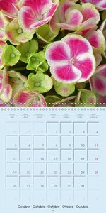 Petal Power - Wonderful Flowers (Wall Calendar 2015 300 × 300 mm