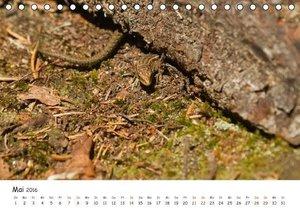 Einblick-Natur: Wildes Norkarelien (Tischkalender 2016 DIN A5 qu