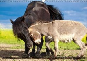 Amitiés animales improbables (Calendrier mural 2015 DIN A3 horiz