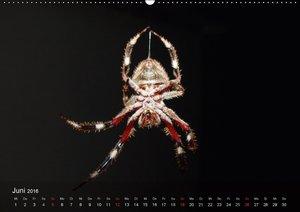 Faszination Spinnen (Wandkalender 2016 DIN A2 quer)