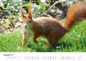 The red squirrels (Wall Calendar 2015 DIN A4 Landscape)
