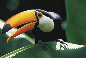AMAZONIA - Abenteuer im Regenwald