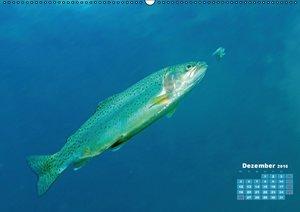 Fische: In Teichen und Flüssen (Wandkalender 2016 DIN A2 quer)