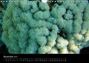 Magic colours Sharm el Sheikh corals and fishes (Wall Calendar 2