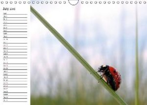 Living World of Insects / UK-Version / Birthday Calendar (Wall C