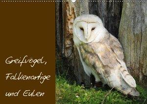 Greifvögel, Falkenartige und Eulen
