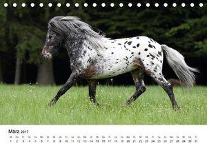 Pferde - im Galopp durch\'s Jahr 2017 (Tischkalender 2017 DIN A5