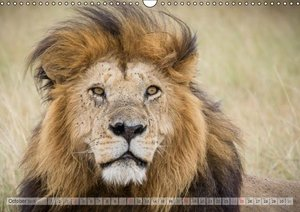 Emotional Moments: Africa\'s Big Five / UK-Version (Wall Calenda