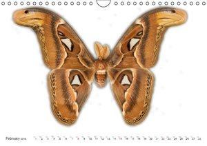 Emotional Moments: Butterflies - exotic butterfly preparations /
