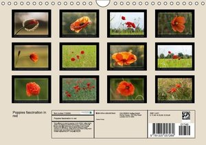 Poppies A Symphony In Red (Wall Calendar 2016 DIN A4 Landscape)