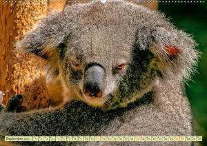 Koala - kleiner Teddy