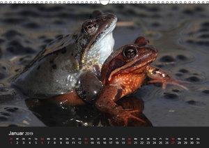 Froschparadies Franken (Wandkalender 2019 DIN A3 quer)
