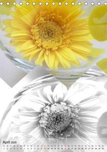Kontraste Magie der gelben Blüten (Tischkalender 2020 DIN A5 hoc
