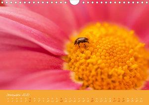 Farbenreiche Blumenmomente